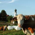 beutelsbach-laendliches-leben